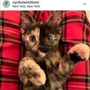 Foster Kitten Love 😻